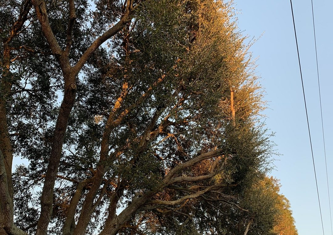 Tree_Service_of_Houston_affordable_tree_service_1531_Hoveden_Dr._Katy__TX_77450